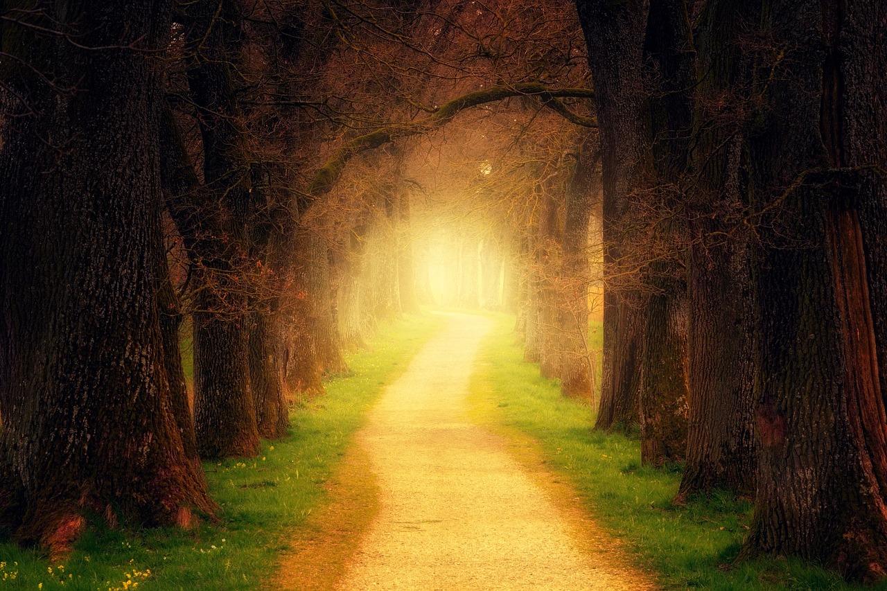 Weg Wald pixabay