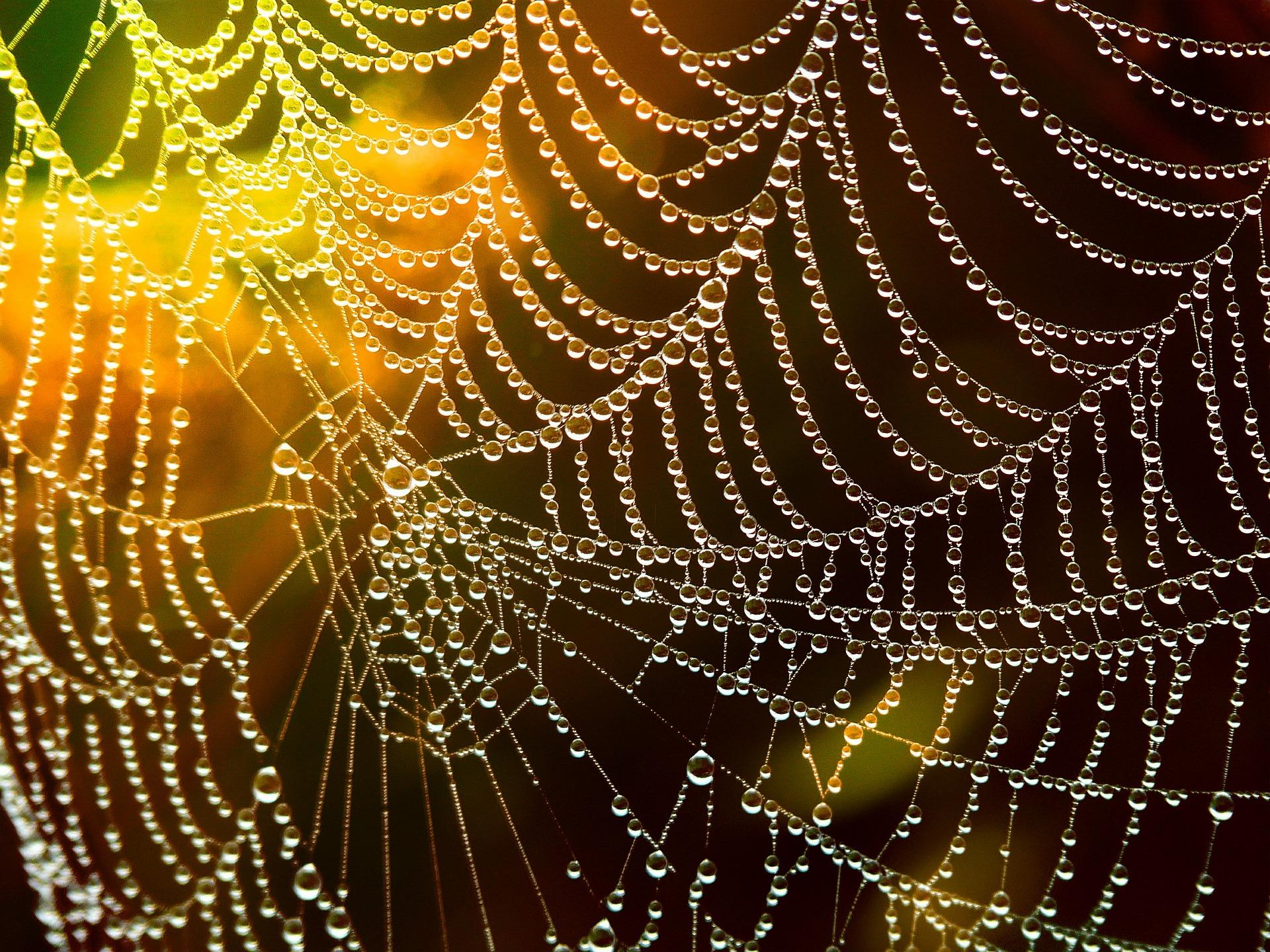 Spinnennetz pixabay