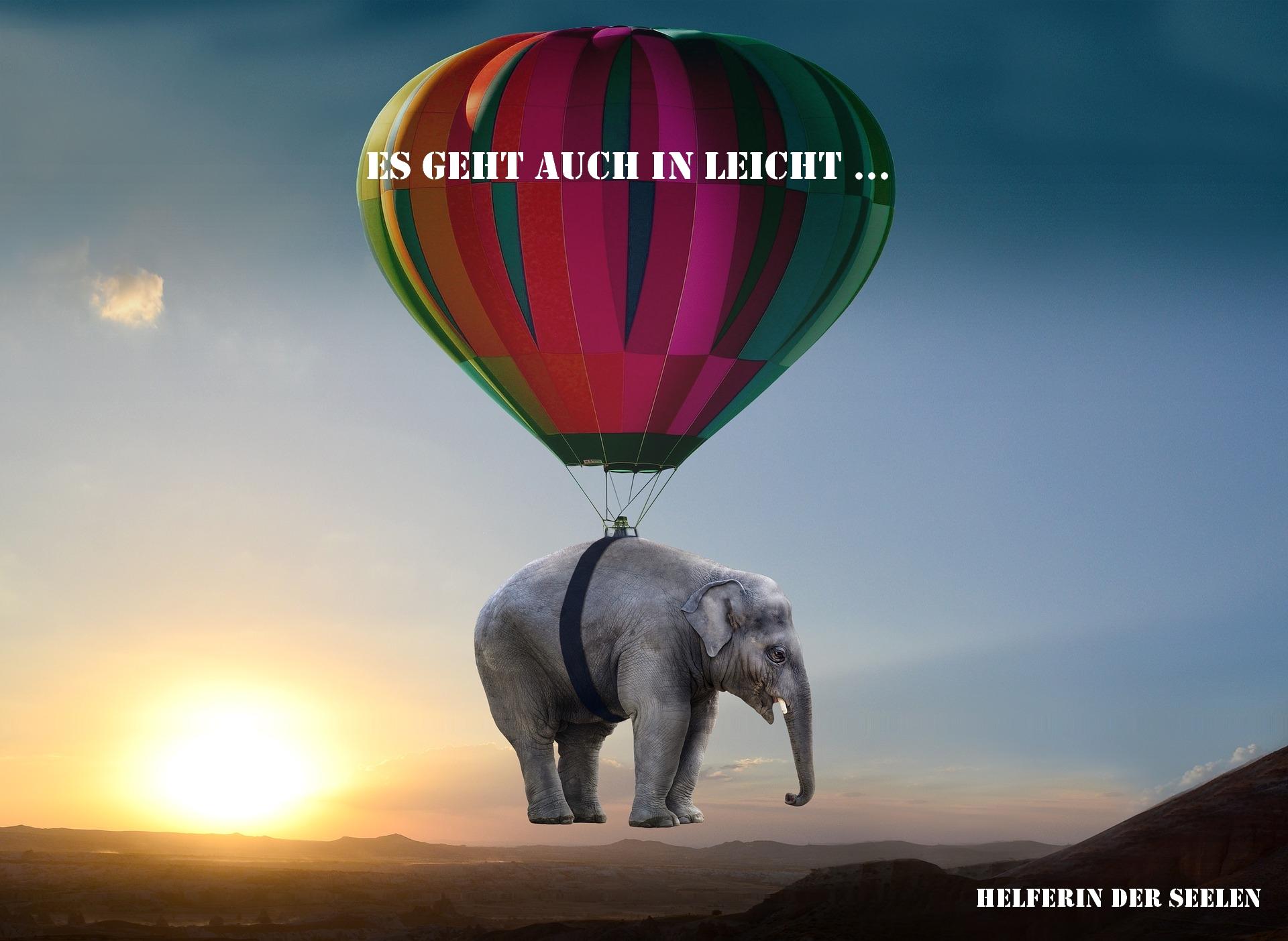 elephant-2605692_1920 Text
