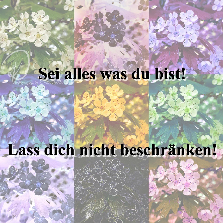 Collage kleiner weiß Text Logo kleiner