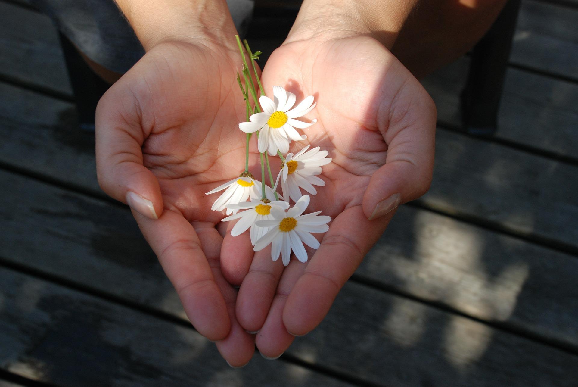 Hände Geschenk pixabay