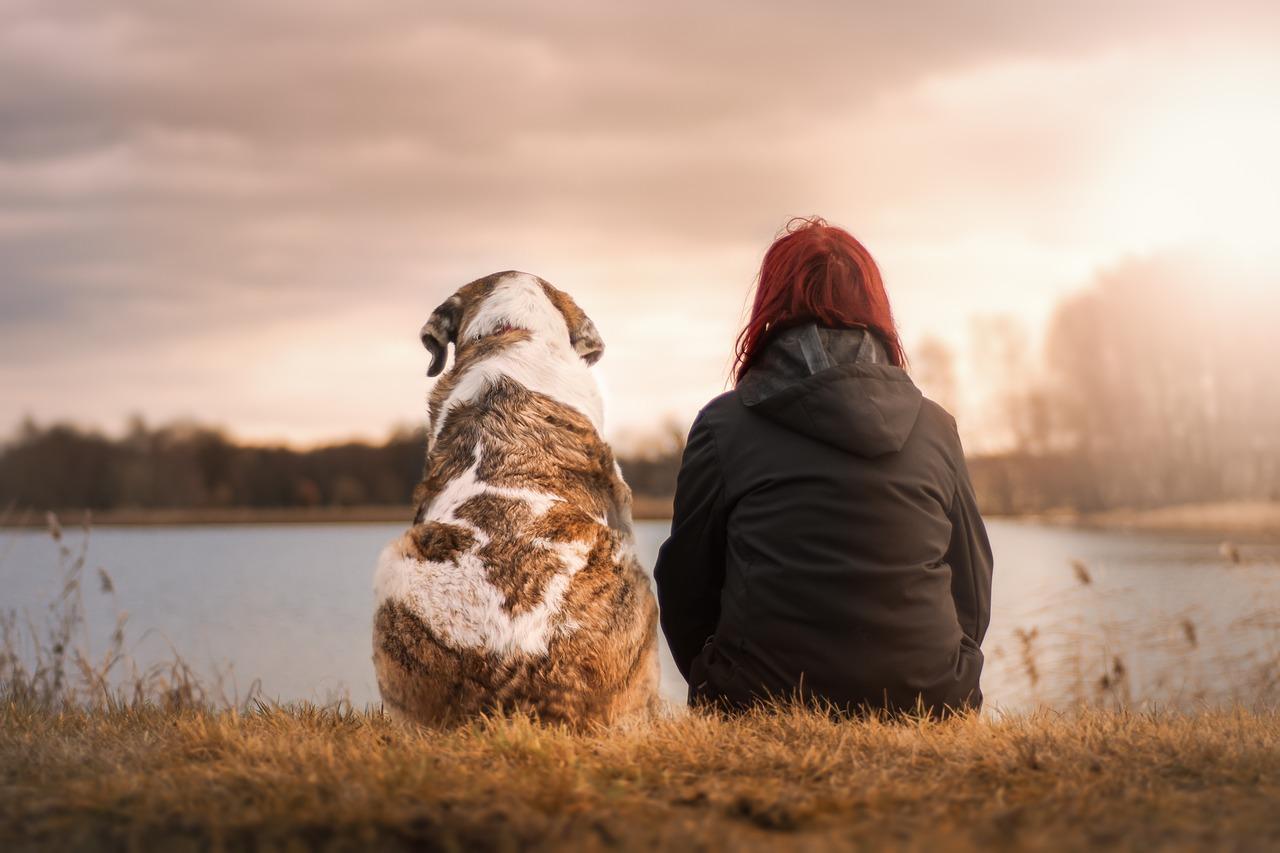 Hund Mensch pixabay