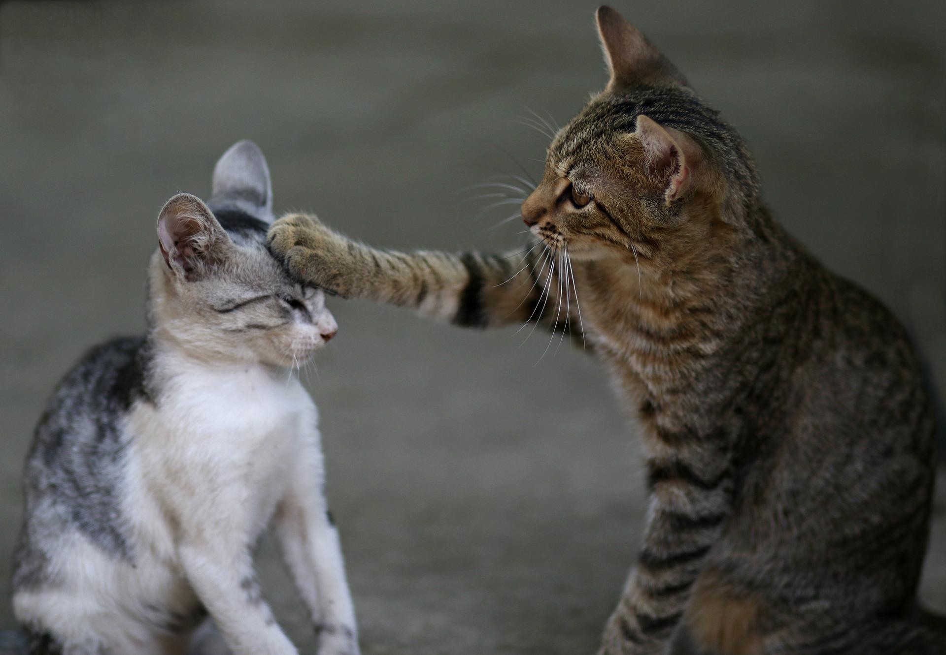 Katzen pixabay