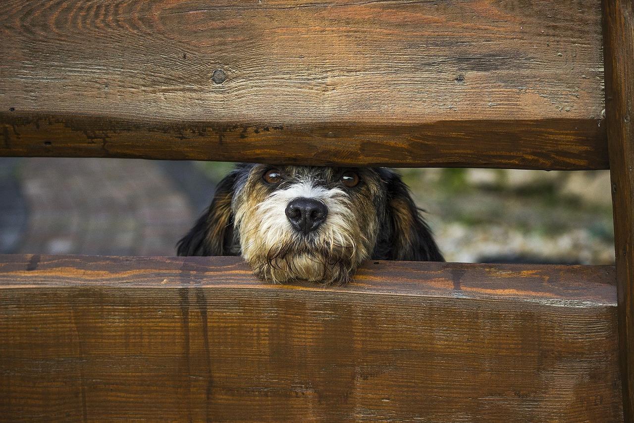 Zaun Hund pixabay