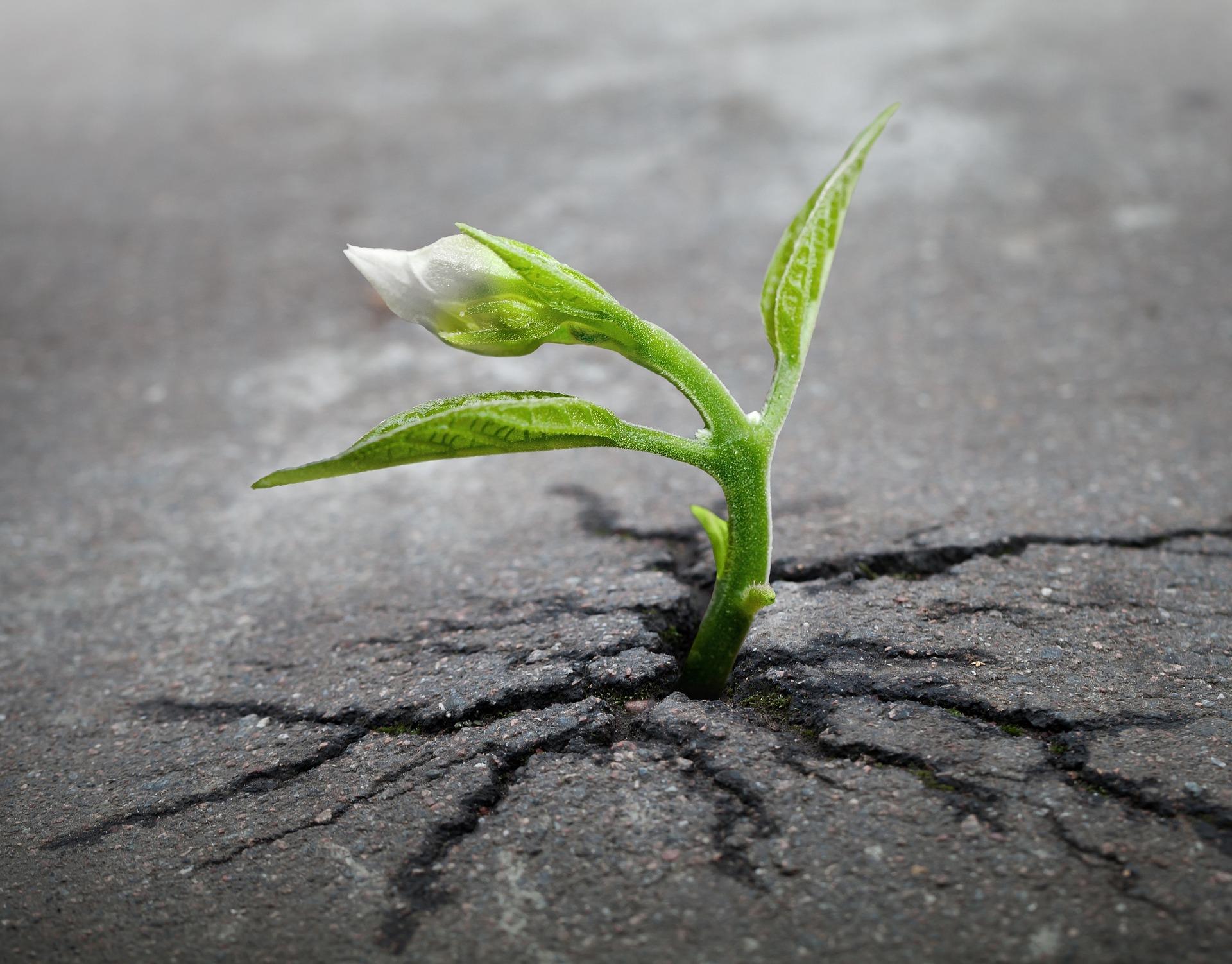 Pflanze Sprößling Asphalt Straße pixabay