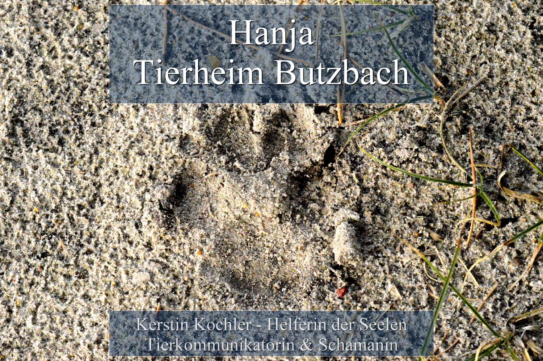 Hanja Tierheim Butzbach