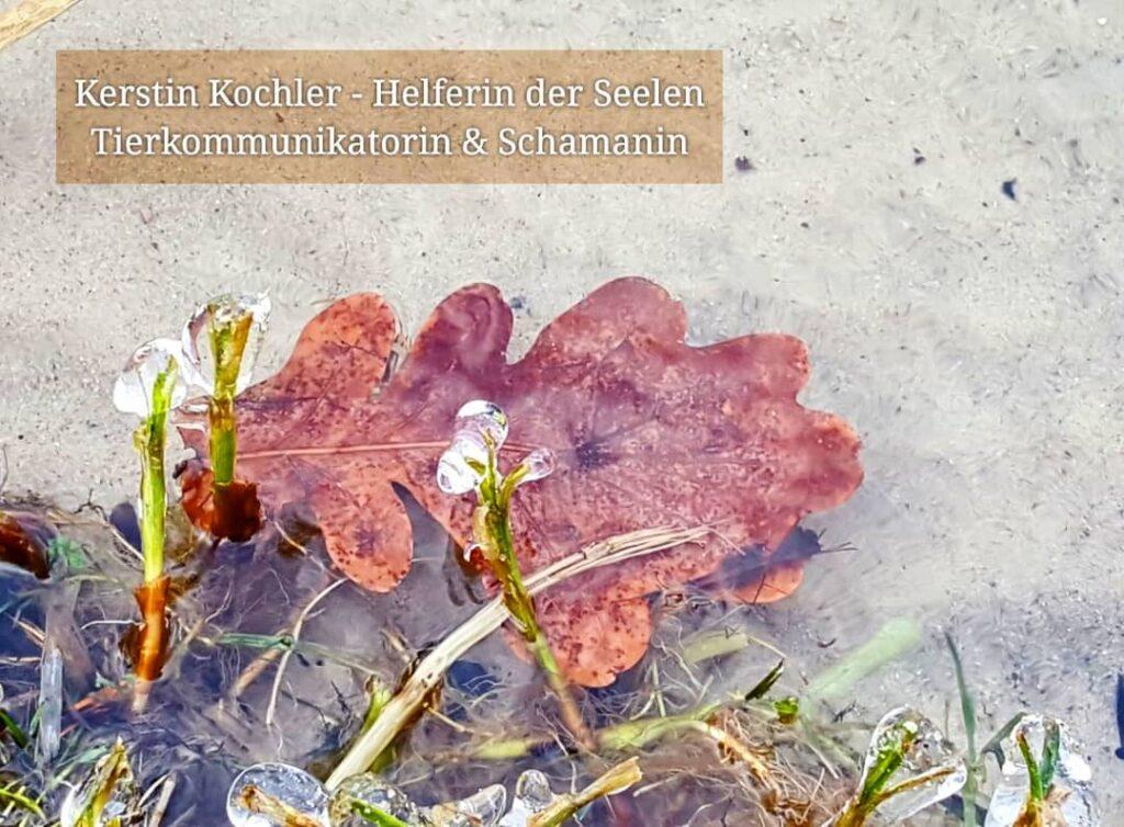 Eiszapfen Wasser Eichenblatt