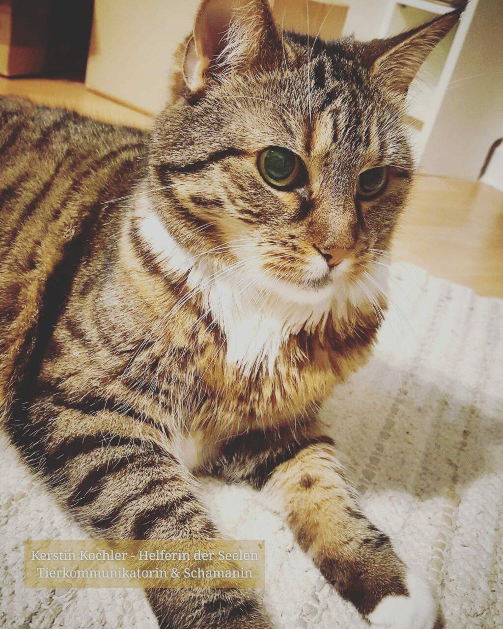 Katze LucyLou Kerstin Kochler