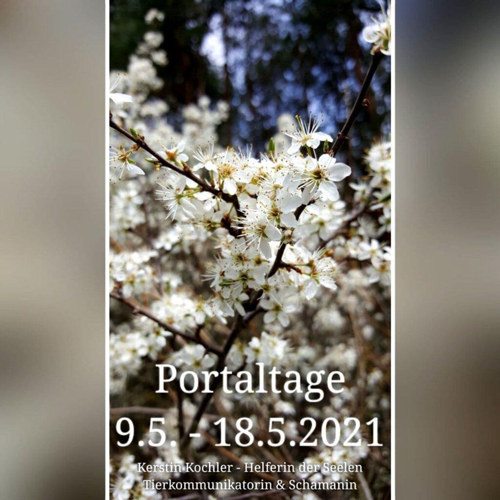 photo 2021 05 09 06 01 29